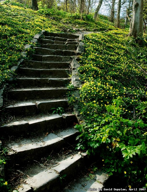Meadow Steps